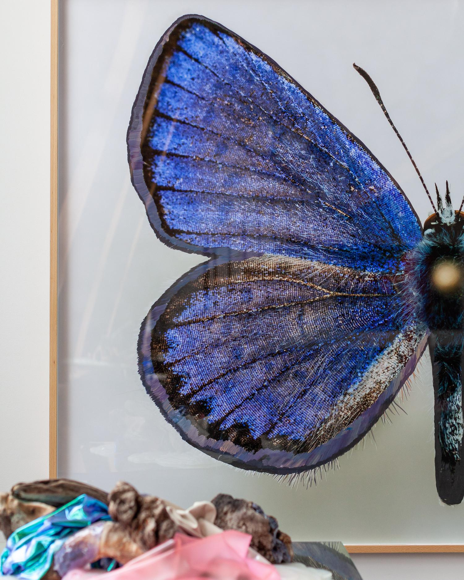 Бабочка Евгения Антуфьева из проекта, который был представлен на Манифесте в Цюрихе в 2016 году. Тогда Евгений жил в номере отеля, в котором когда-то жил Набоков; вся серия работ была посвящена любви писателя к бабочкам